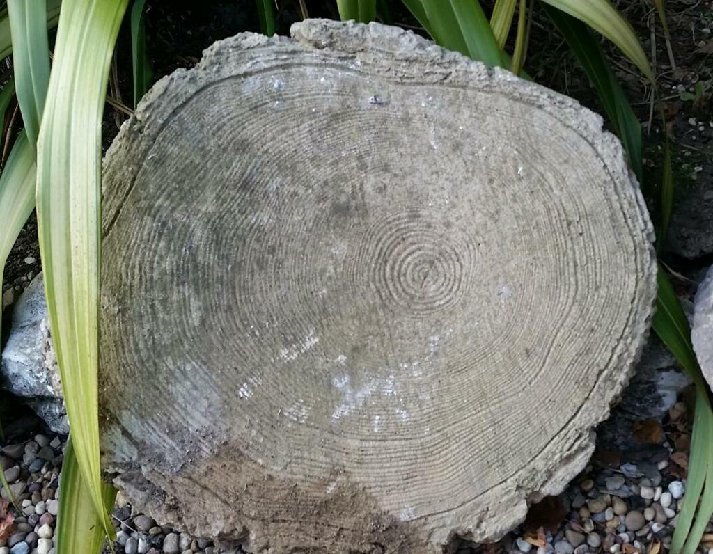 concrete round stepping stones tree slice effect in