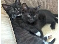 Adorable Kittens READY NOW !