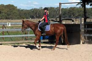 Woodstock Smokin Whisper- Registered Paintbred Mare Benalla Benalla Area Preview