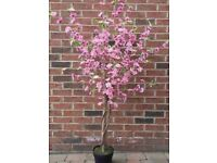 6 x 5ft pink artificial cherry blossom trees - wedding centrepieces