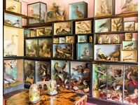 Wanted: Antique Taxidermy birds, mammals, fish, trophy heads and skins, natural history