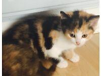 💕 Gorgeous little kittens for sale 💕