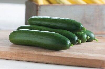 Diva F1 Cucumber Seeds   Vigorous  Disease Resistant Plants  Burpless Too