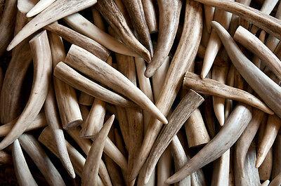 Deer & Elk Antler Tips Tines Assorted - 1lb Bag Of Premium Grade Craft -