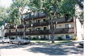 LARGE NEWLY RENOVATED 1 BEDROOM - 1224 7TH AVE. N. (CITY PARK)