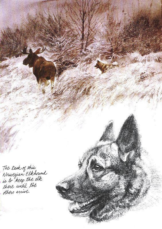 Norwegian Elkhound - Vintage Dog Print - Poortvliet