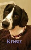 Young Female  - Bluetick Coonhound-Redbone Coonhound