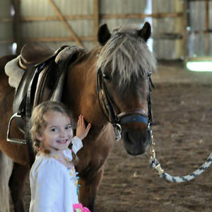 Pony Rides / Petting Zoo Available For Parties And Events