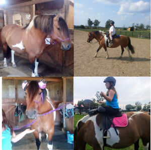 Beautiful Fjord/paint mare for part board, possibility for lease
