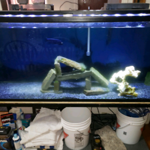 Selling or trade 125 gallon fish tank