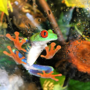 Red Eye Tree Frogs for Sale Different sizes - 40,45,35 $