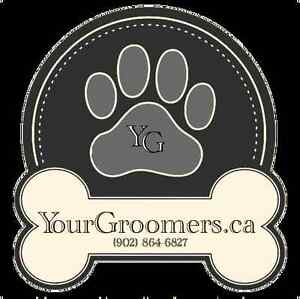 Your Groomers - Lower Sackville, NS