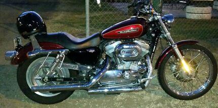 Harley Davidson XL883c 2008 Camira Ipswich City Preview