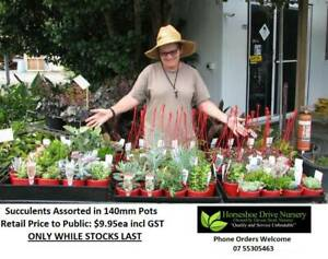 Assorted Succulents & Cactus - Suit Patio Gardens - Windowsills Mudgeeraba Gold Coast South Preview
