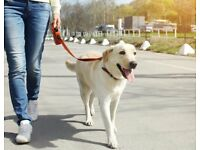 Dog Walking Services (Ferndown and Surrounding Area's)