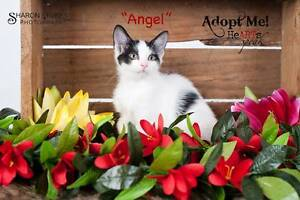 rescue kitten Mardi Wyong Area Preview