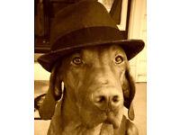 Gatsby Dog Walking