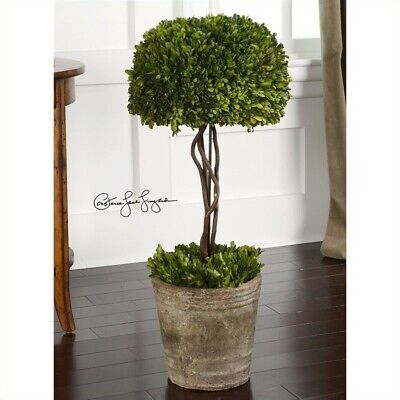 Uttermost Tree Topiary Preserved Boxwood in Natural -