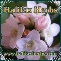 Medicinal Herbsand Spices, Teas, Essential Oils