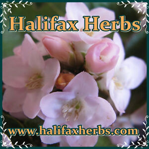 Medicinal Herbs and Spices, Teas, Essential Oils