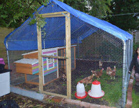 8ft Chicken Coop & 10ft x 15ft Poultry Cage