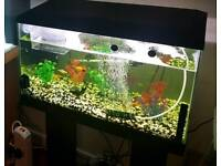 60 litre fish tank with pump and heater