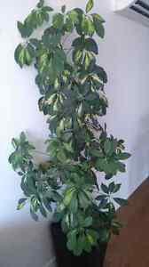 Plantes d'intérieur / Interior plants