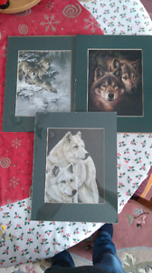 Lot of 3 Wolf Pictures