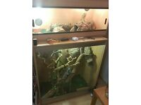 Frilled Lizard and Bearded Dragon free to good home