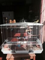 Two Budgies with big cage or best offer