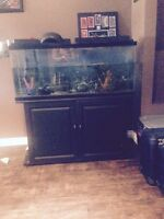 55 gallon fish tank with cabinet