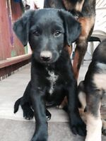 Puppies ready for forever home
