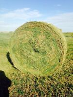 Alfalfa bale round or little squares