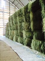 Large and small square Hay Bales