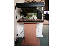juwel fish tant 60 liter with stand