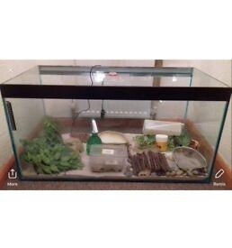Lizard tank vivarium