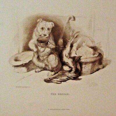 Sir Edwin Landseer, The Beggar, Cute Little Dog, Vintage 1889 Antique Art Print