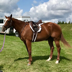 8 year old TB mare -Connection