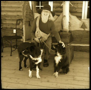 Studio~ cabin for painter and companion Border Collies