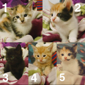 Kittens in need of a new home