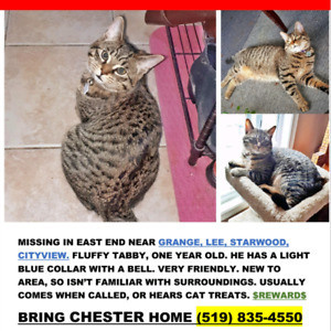REWARD MISSING TABBY