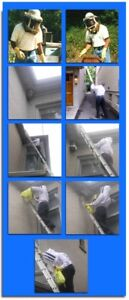 Affordable Pest Control and Bee Removal-Trusted and Effective