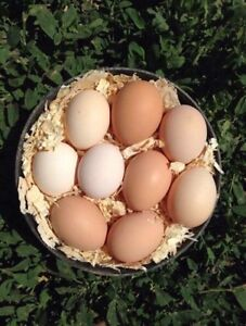 Farm Fresh Eggs!