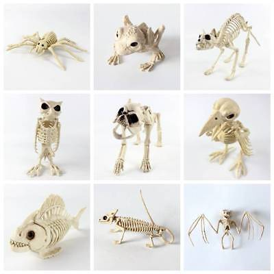 Halloween Skeleton Bat Mouse Frog Prop Animal Bones Party Shop Decoration Horror