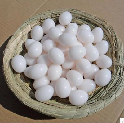 Pigeon Eggs 20 Pieces Bird Ited Products With Plastic Filled Supplies Cited Tool