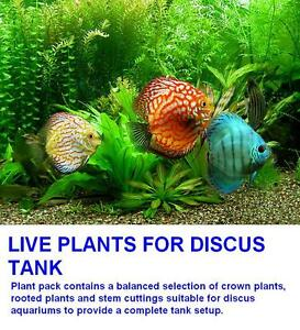10 Live SOFTWATER Aquarium plants Discus fish tank cabomba ludwigia vallis