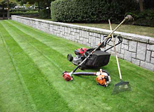 Grass cutting Granville Parramatta Area Preview