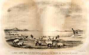 Henderons-VALEY-OF-THE-AMAZON-Tinted-Litho-1854-ILLIMANI-SNOW-PEAK-VIGUNAS