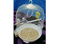 Budgie with cage and food