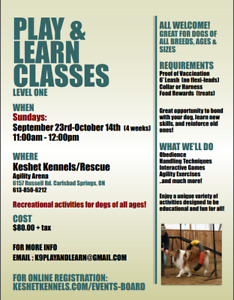 Play & Learn Dog Classes